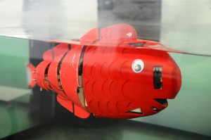 A close up example of the robotic fish in water. Photo Courtesy of NYU Poly