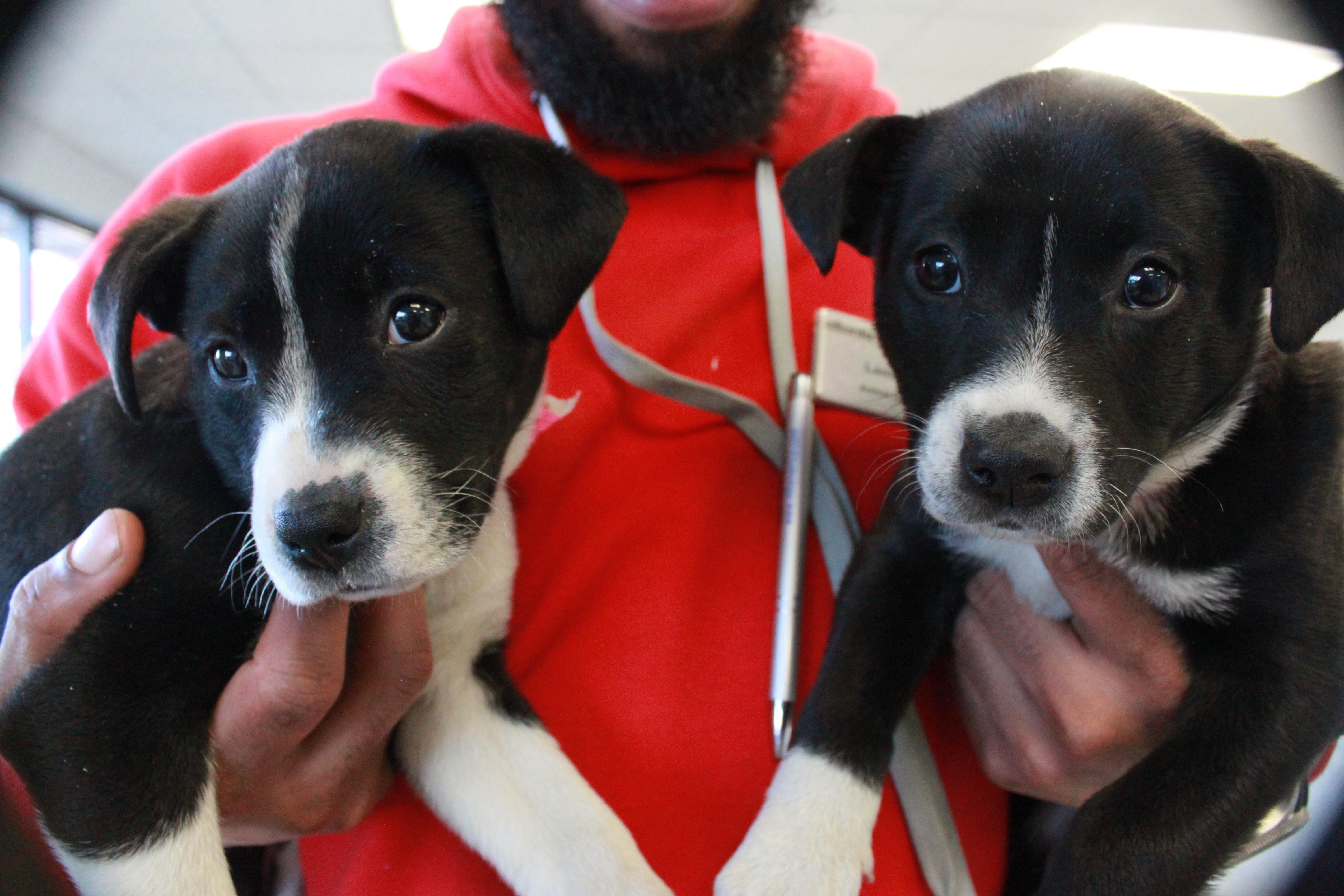 Pets find shelter at the Atlanta Humane Society - The Signal   Toy Dog Rescue Atlanta