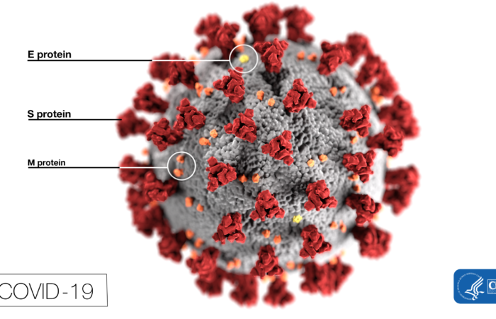 An image of COVID-19, commonly known as Coronavirus, provided by the CDC.